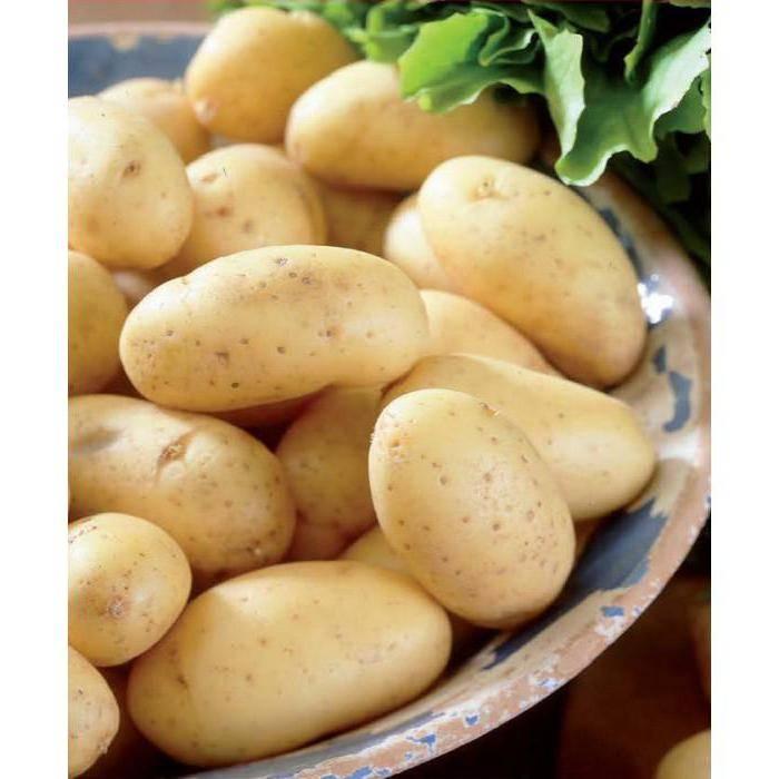 Многоликий картофель «сорокодневка»:  описание сорта, фото, советы по выращиванию