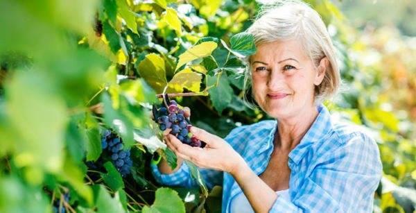 Пересадка взрослого винограда весной