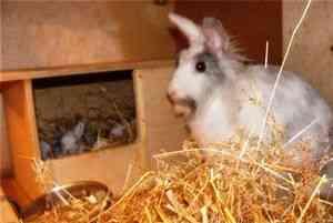 Спаривание, случка кроликов в домашних условиях для начинающих
