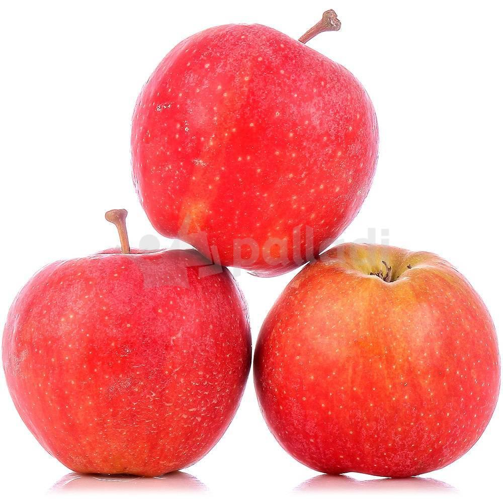 Особенности выращивания и правила ухода за яблоней сорта гала