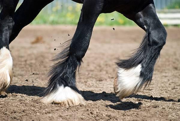 Копыта у лошадей