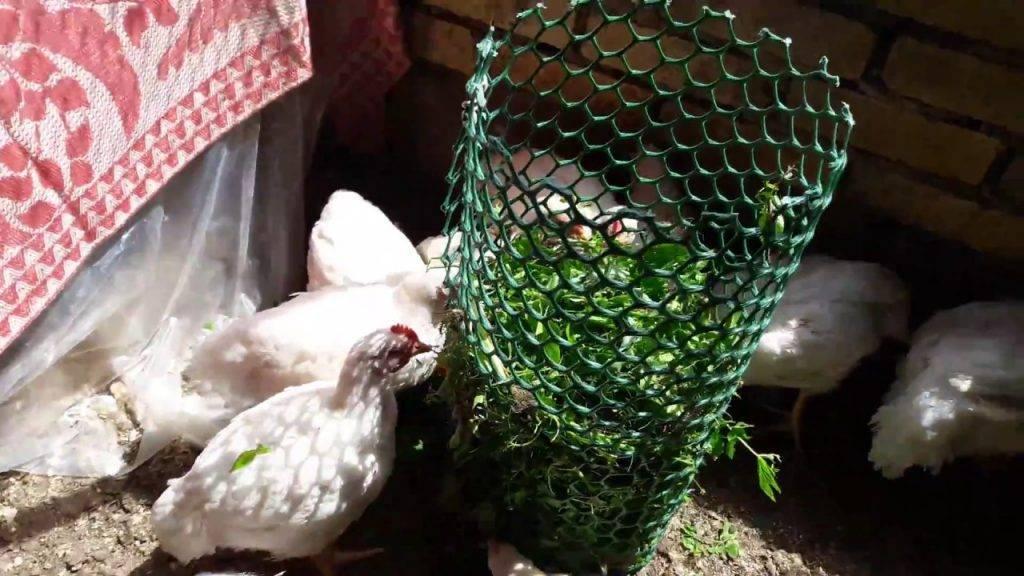 Как и чем кормить бройлерных цыплят в домашних условиях.