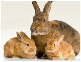 Болезни кроликов: фото, симптомы и их лечение, видео