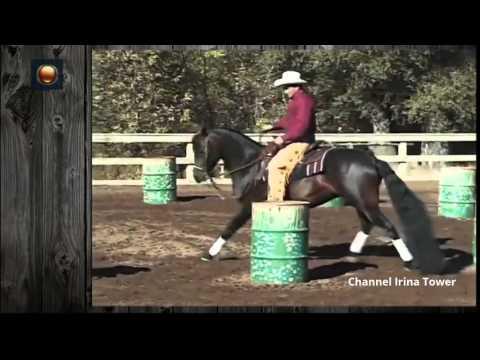 Как тренировать лошадь - wikihow