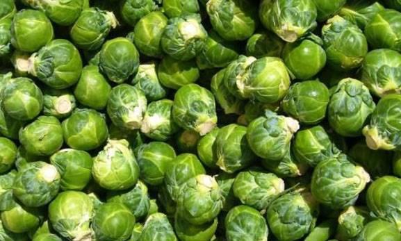 Посев капусты брюссельской