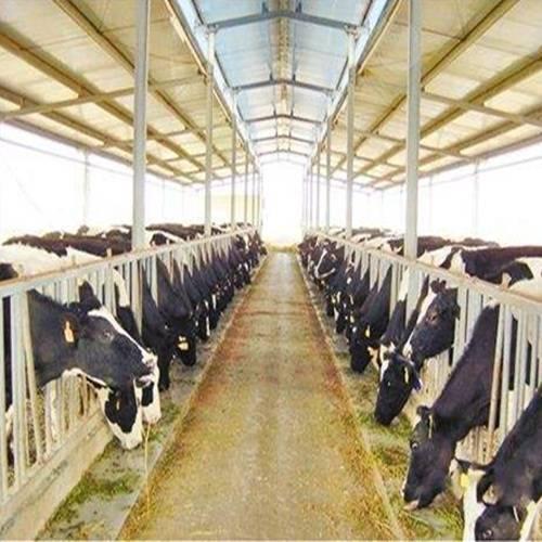 Машины и технологическое оборудование ферм и комплексов для крупного рогатого скота