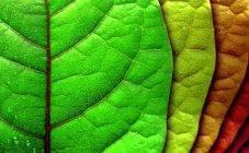 Отвечаем, почему желтеют листья у яблони в июне и что делать для их лечения