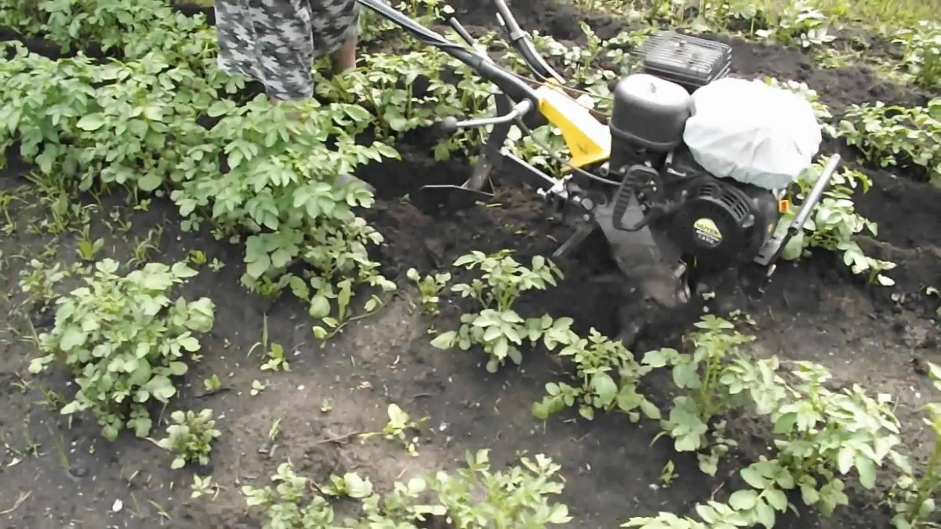 Окучивание картофеля мотоблоком - инструкция на видео