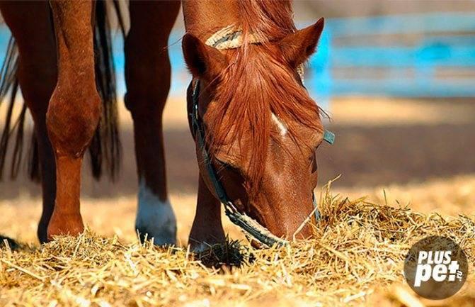 что обычно едят лошади