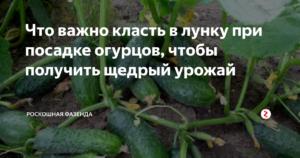 Как посадить огурцы в грунт