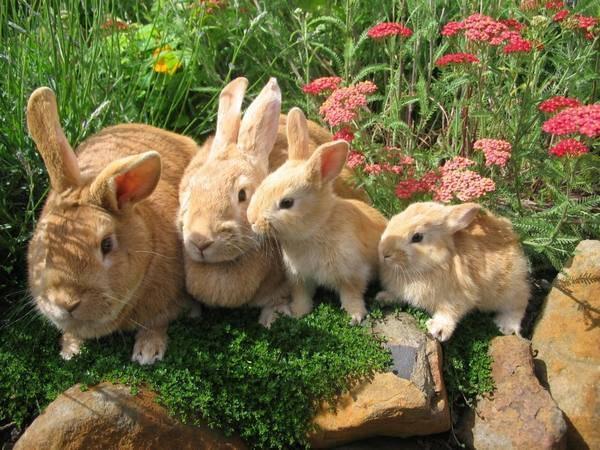 Почему дохнут кролики. почему кролики дохнут без видимых причин, и что при этом делать? дохнут кролики что делать чем лечить