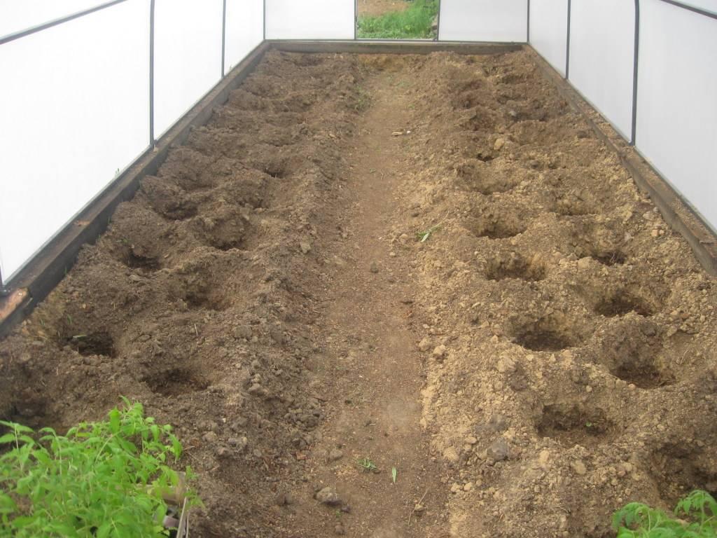 Когда сажать огурцы на рассаду для теплицы и как правильно это сделать