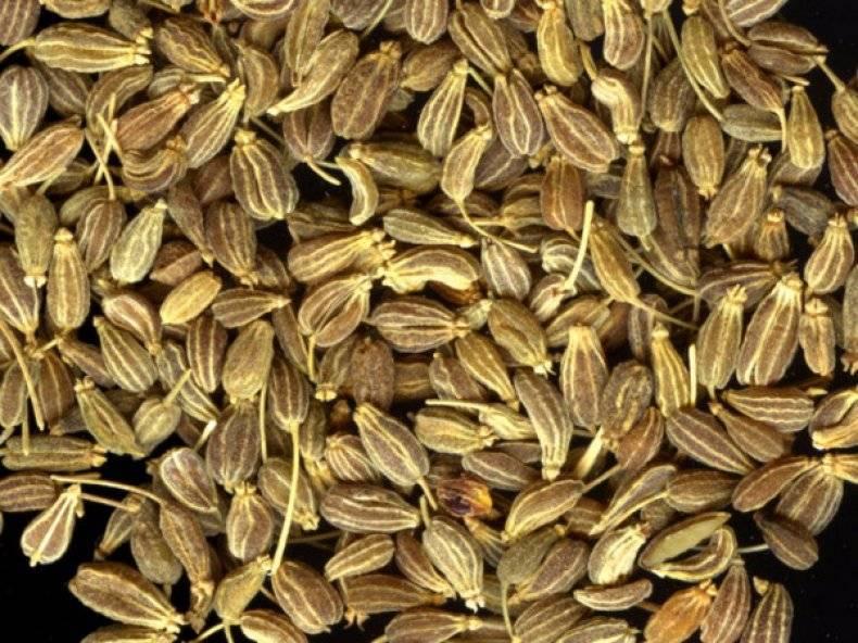 Через сколько дней всходит петрушка после посева: долго ли или быстро, в какой срок прорастают семена в открытом грунте, когда время посадки в теплице, как выглядит?
