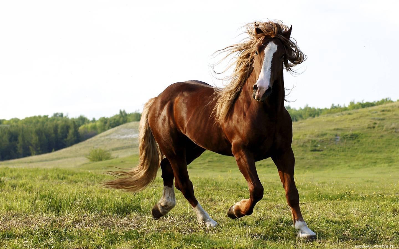 Какие бывают масти у лошадей?