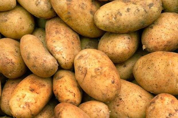 Картофель адретта: подробное описание, характеристика сорта и фото