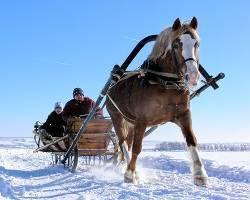 Телега для лошади: как сделать и запрячь самостоятельно