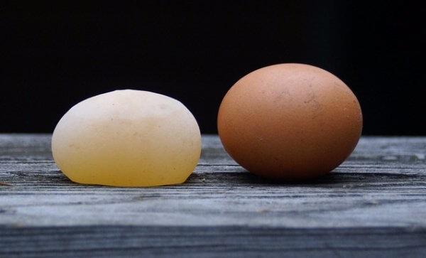 Почему куры несушки льют яйца (несут без скорлупы): причина и что делать
