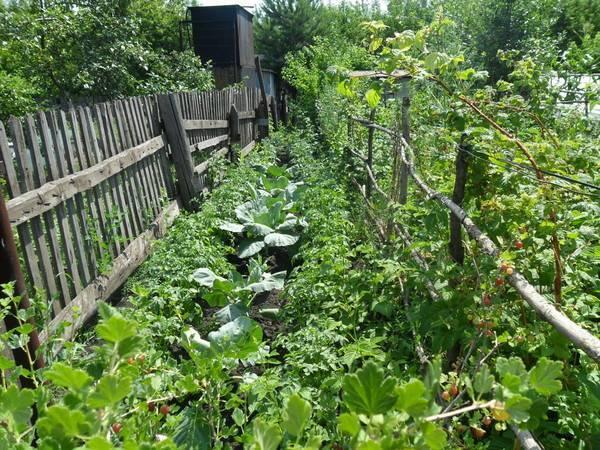 Какой грунт выбрать для капустной рассады