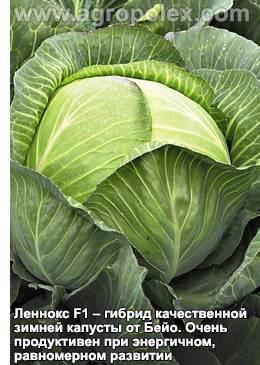 Капуста: виды (белокочанная, савойская, брокколи, брюссельская), описание 33 лучших сортов, особенности агротехники (фото & видео) +отзывы