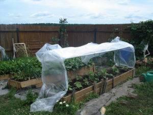 Размещение помидоров в теплице: отличная инструкция