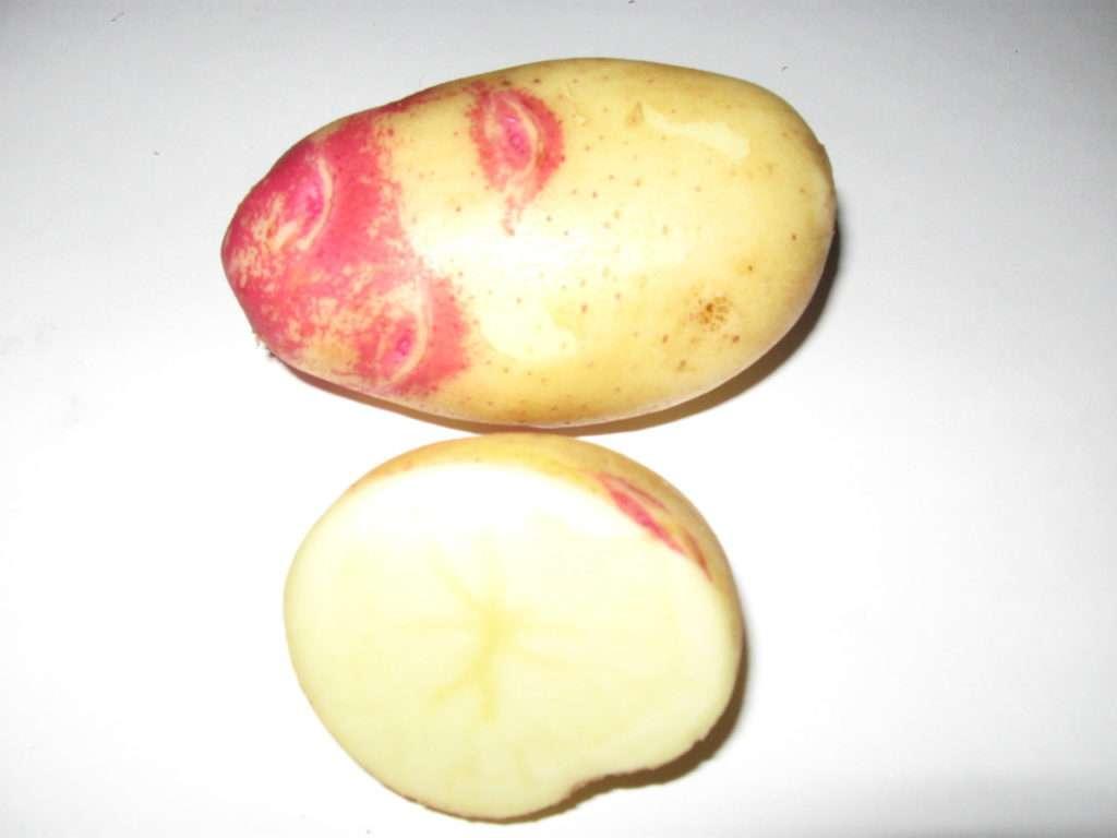 Картофель сорта наташа: описание и фото, урожайность, отзывы