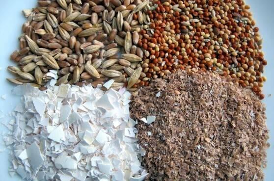 Чем кормить перепелов — пошаговая инструкция, пробор рациона и частоты приема корма (видео + фото)