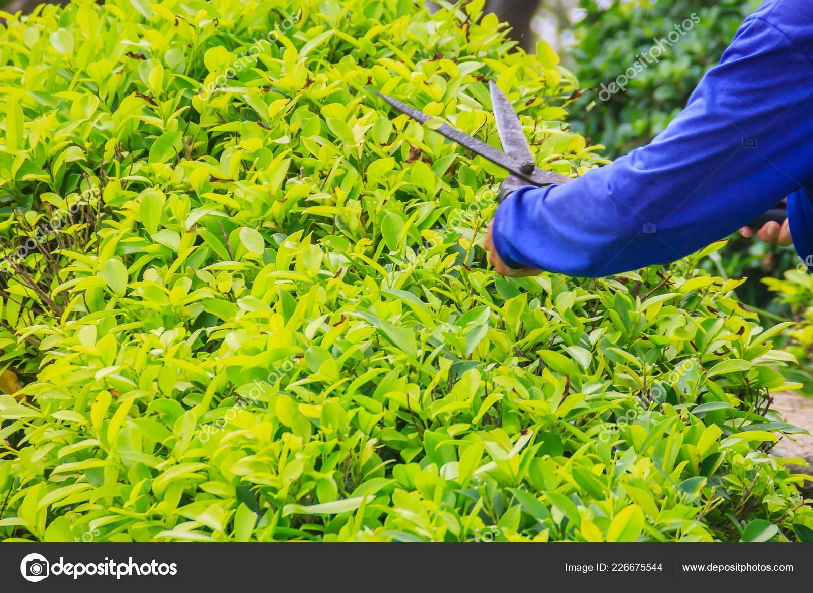 Весенняя обрезка деревьев и кустарников | дом сад огород