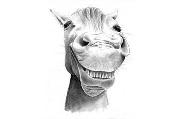 Сколько живут лошади? сколько лет в среднем живут кони в домашних условиях? срок жизни в дикой природе. как определить возраст по зубам?