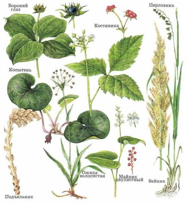 Легенды о растениях |  развивайка