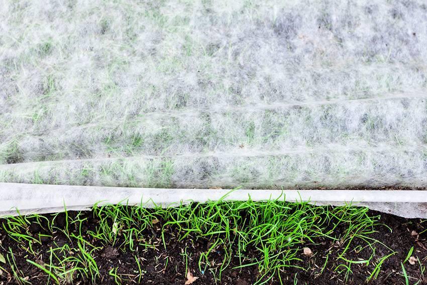 Помидоры под пленкой или укрывным материалом – 7 советов по посадке