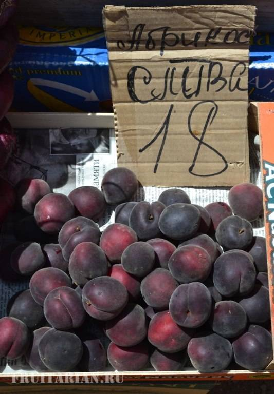 Гибрид сливы абрикоса и персика шарафуга описание. описание абрисливы