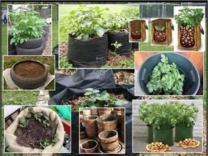 Выращивание картофеля в бочке: правильная технология и последующий уход, плюсы и минусы, а так же выбор подходящих клубней, инструментов, земли и удобрения