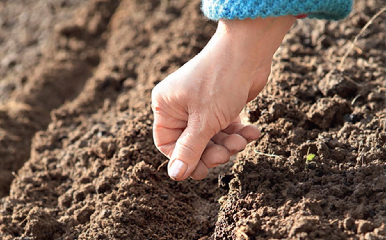 Как посеять морковь, чтобы потом не прореживать: как правильно сажать в открытый грунт семена с песком (соотношение), какой способ лучше, чтобы быстро взошли?