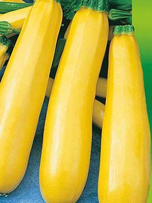 Кабачок золотинка — отзывы, описание сорта и характеристика цуккини