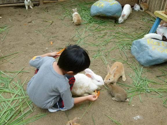 Конский щавель для кроликов: можно ли давать эту траву, как вводить растение в рацион и кормить им животных?