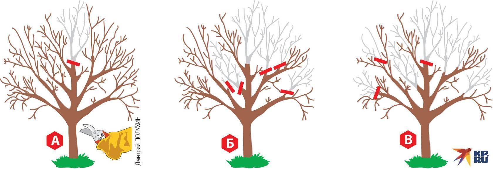 Почему не растет саженец яблони и что делать, если яблоня растет медленно