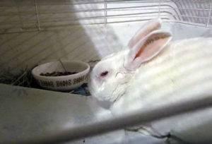 Заболел любимый кролик: что делать?