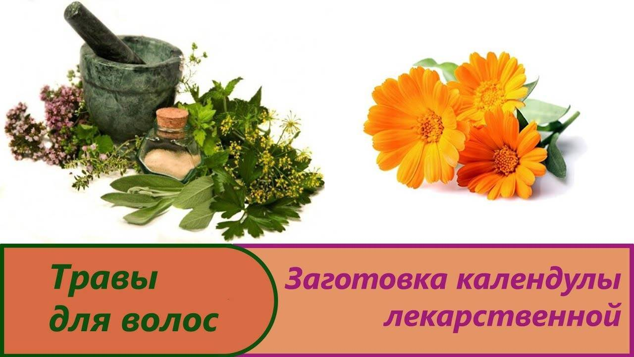 Календула для лечения заболеваний: народные рецепты