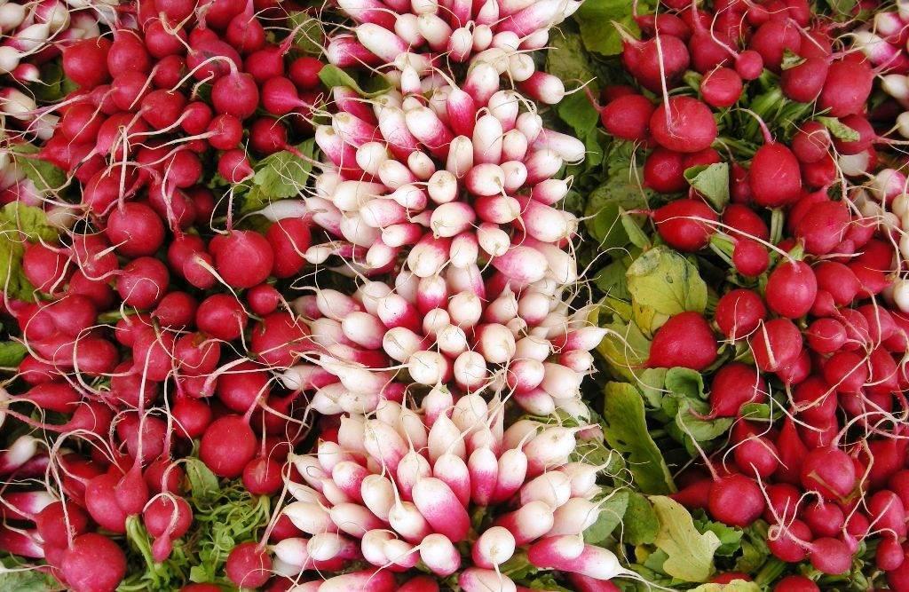 Сажаем редиску ранней весной: как правильно сеять семена овоща в открытый грунт, когда это следует делать и какие сорта лучше выбрать?