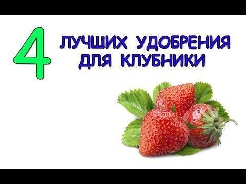 Как подкормить клубнику - схема подкормки, какие удобрения выбрать