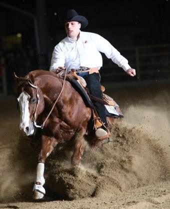 Как научить лошадь занимательным трюкам
