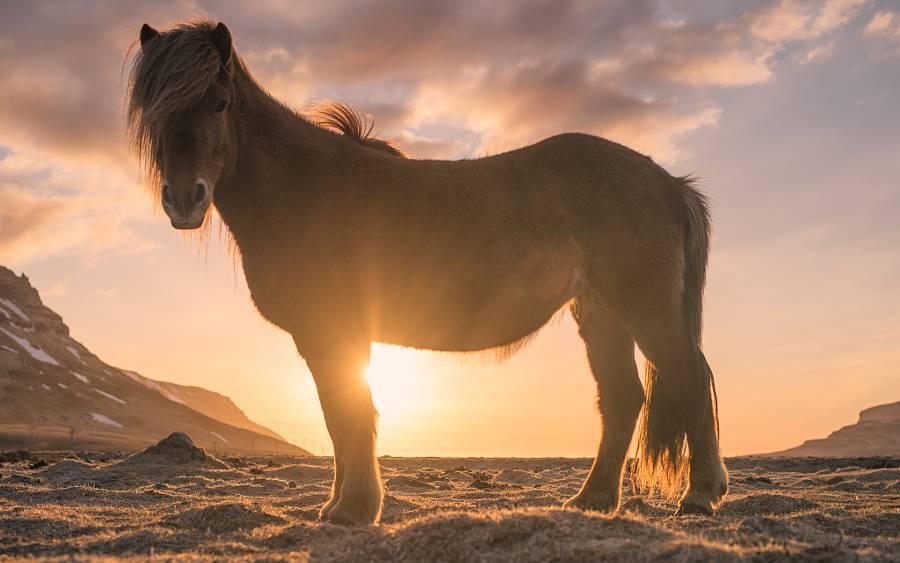 Мустанг — дикая лошадь