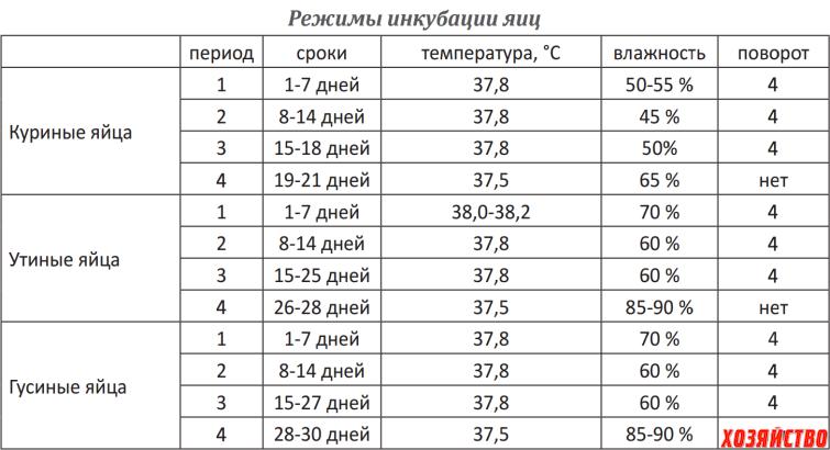 Срок инкубации куриных яиц: время, период, сколько дней лежат