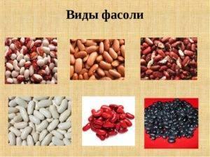 Популярные виды фасоли