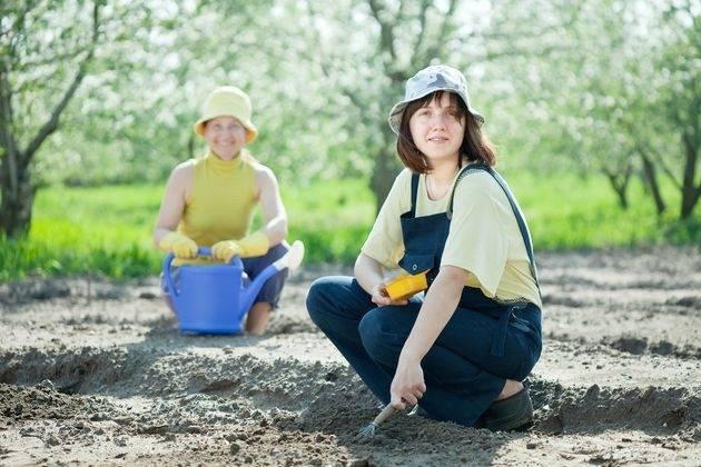 Когда и как сажать морковь и свеклу в открытый грунт весной, правила