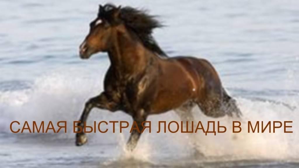 Разновидности и особенности бега лошади