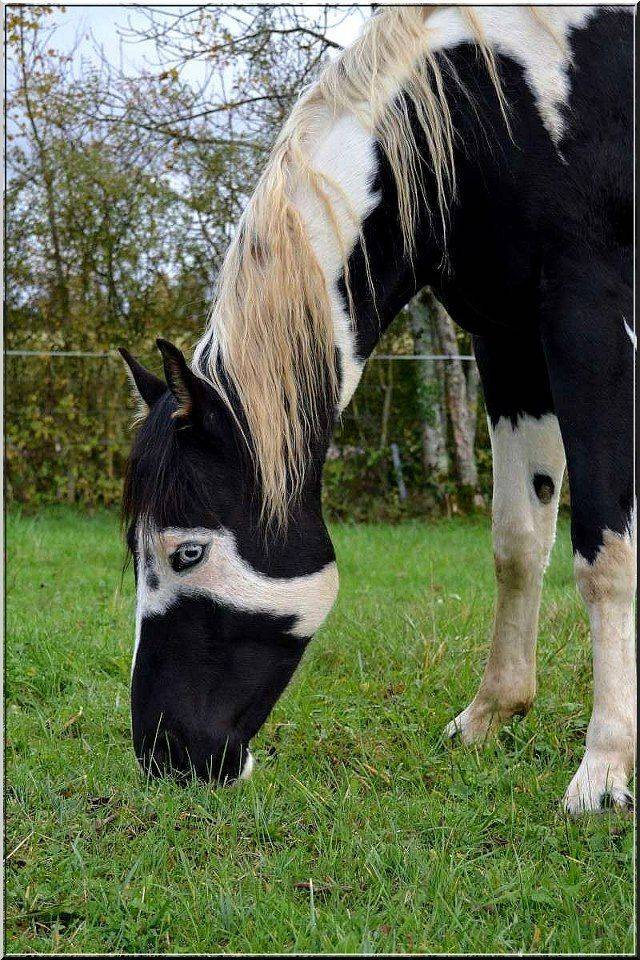 Красивые лошади (50 фото): список самых необычных пород коней в мире. очень редкие масти