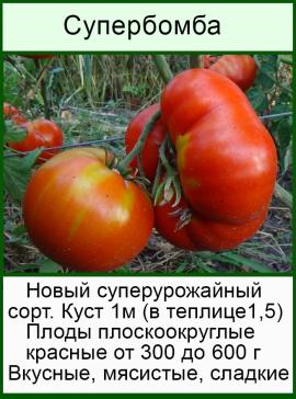 Томат розовый шлем: описание сорта, отзывы, фото, характеристика   tomatland.ru