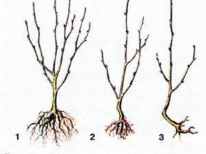 Ваш первый сад: как правильно посадить саженец весной