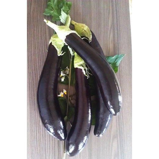 Баклажан фарама f1 — подробное описание сорта, отзывы и урожайность
